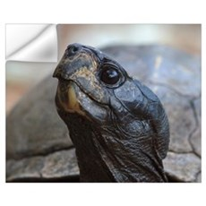 gopher tortoise Wall Decal