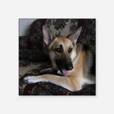 "Cute German shepherd cup Square Sticker 3"" x 3"""