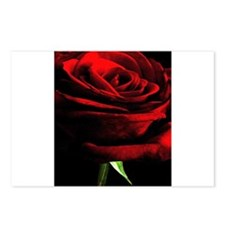 Red Rose of Love on Black Postcards (Package of 8)
