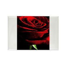 Red Rose of Love on Black Velvet Magnets