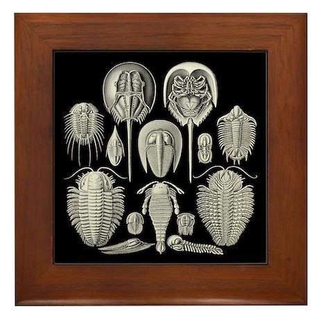 Trilobite Framed Tile