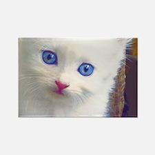 Blue-Eyed Kitten Rectangle Magnet