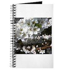 Plum Tree in Bloom Journal