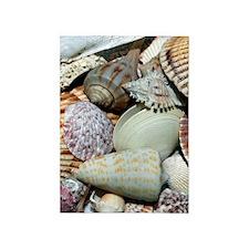 Colorful Seashells 5'x7'Area Rug