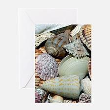 Colorful Seashells Greeting Card