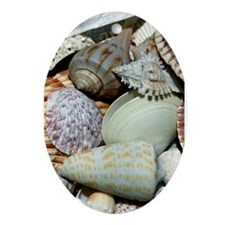 Colorful Seashells Ornament (Oval)