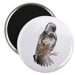 Iridescent Starling Magnet