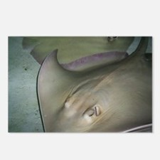 Stingray Postcards (Package of 8)