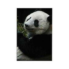 Panda (SD1) Rectangle Magnet