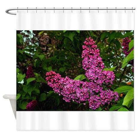 Lilac Bush Shower Curtain By Admin CP74656649