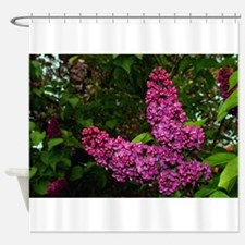 Lilac Bush Shower Curtain