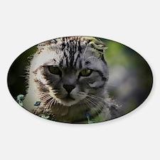 Rupert the cat Sticker (Oval)