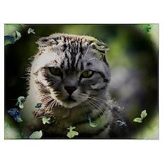 Rupert the cat Poster
