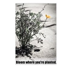 Bloom Where You Are Plant Postcards (Package of 8)