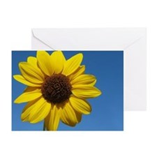 A Wild Sunflower Greeting Cards (Pk of 20)