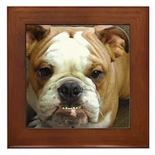 Bulldog Beauty Framed Tile