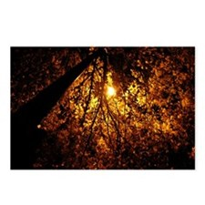 Night Leaves Postcards (Package of 8)