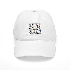 Birds of the Mid-Atlantic Coast Baseball Cap