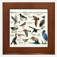 Birds of the Mid-Atlantic Coast Framed Tile