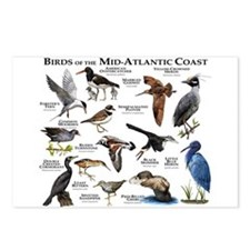 Birds of the Mid-Atlantic Postcards (Package of 8)