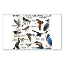 Birds of the Mid-Atlantic Coas Decal