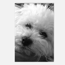 Unique Bichon frise Postcards (Package of 8)