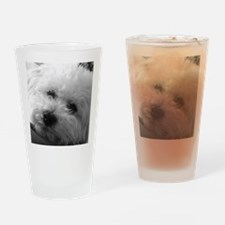 Cute Bichon frise Drinking Glass