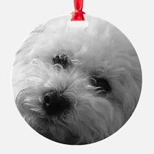 Cute Bichon frise Ornament