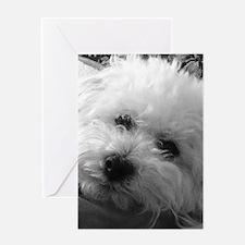 Cute Bichon Greeting Card