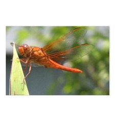 Blazing Dragonfly Postcards (Package of 8)