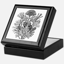 Fan Design - Diatomea by Ernst Haecke Keepsake Box