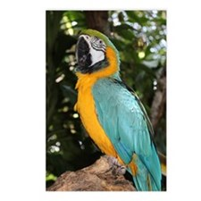 Yellow and Blue Macaw Postcards (Package of 8)