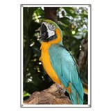 Parrot Banners