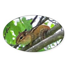 Chipmunk In A Tree Decal