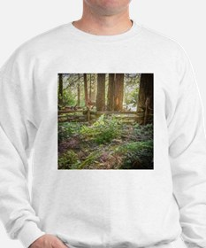 Light Through the Forest Sweatshirt