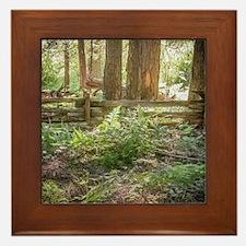 Light Through the Forest Framed Tile