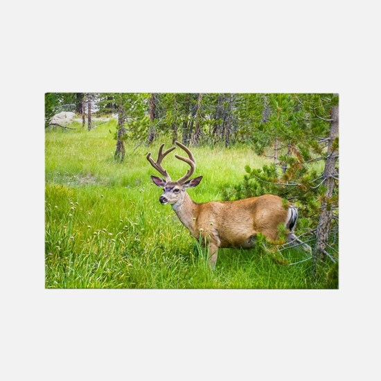 Buck in a Lush Green Meadow Rectangle Magnet