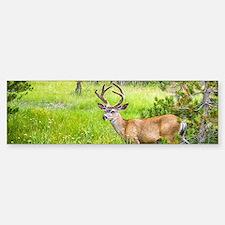 Buck in a Lush Green Meadow Sticker (Bumper)