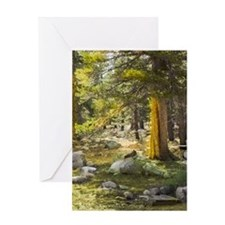 Sun Splashed Forest Greeting Cards