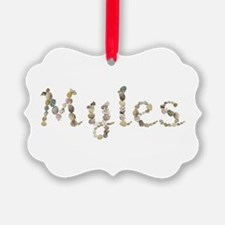 Myles Seashells Ornament