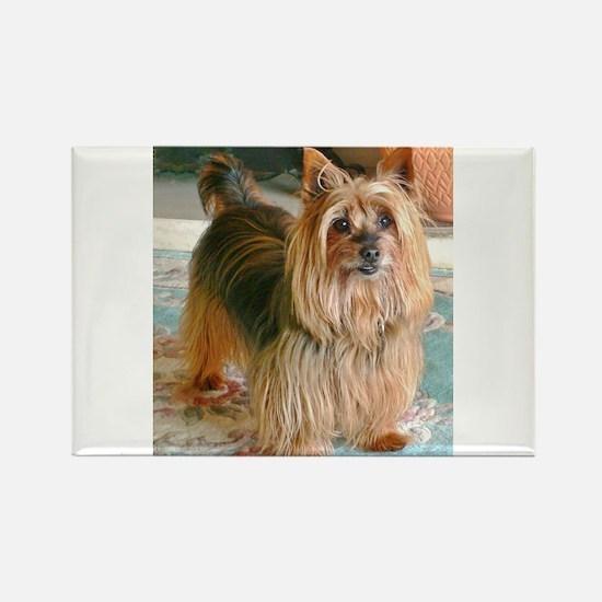 Australian Silky Terrier Magnets