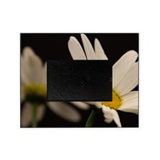 Cute Daisy Picture Frame