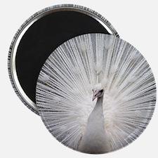 Beautiful white peacock elegant art deco ph Magnet