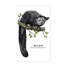 Aye-Aye Decal