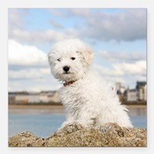 """DOG AT THE BEACH Square Car Magnet 3"""" x 3"""""""