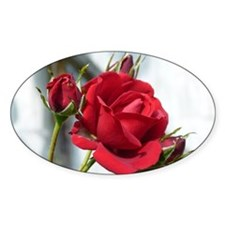 English Rose Decal