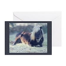Mini Horse cards blank/10pk/envelopes