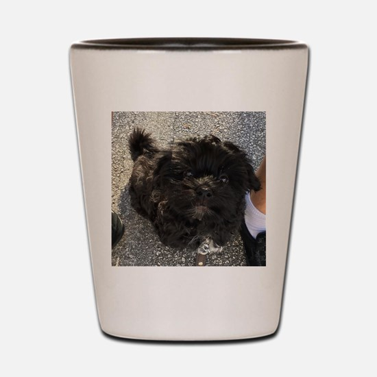 Cute Havanese Shot Glass
