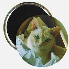 Red Burmese Cat in box Magnet