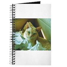 Red Burmese Cat in box Journal